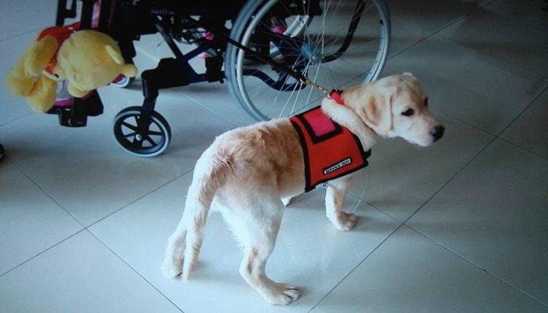 σκύλος-βοηθός