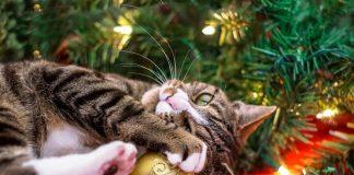 Γάτα χριστουγεννιάτικο δέντρο